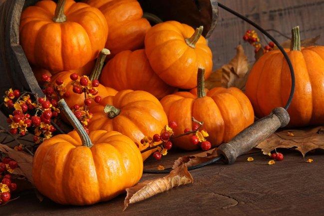Mindal Cafe: Осень — сезон тыквы