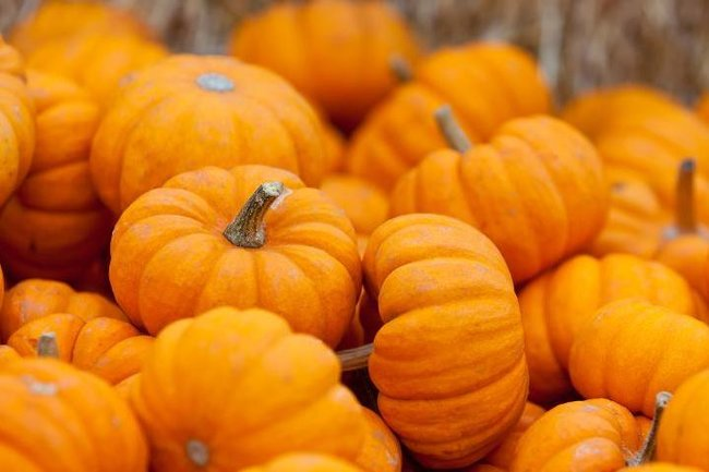 Сыроварня: Halloween